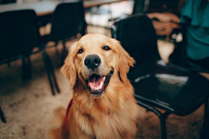 dog-raw-food-dehydrator